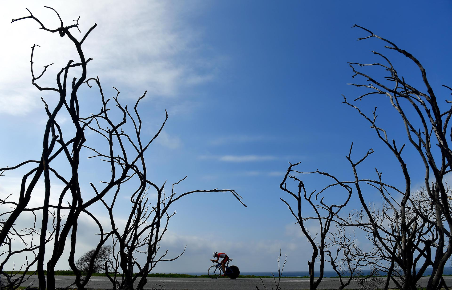A triathlete bikes through petrifies trees during the Isuzu IRONMAN 70.3 World Championship Women in Port Elizabeth, South Africa (Photo by Donald Miralle/Getty Images for IRONMAN).